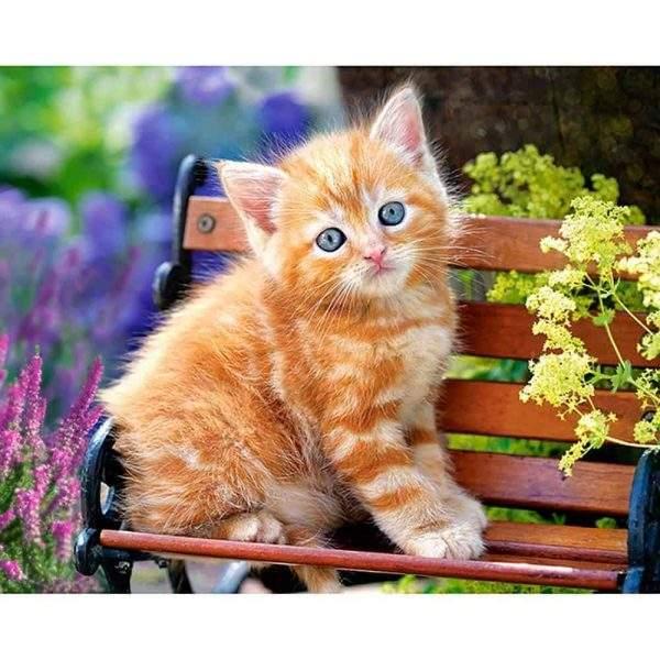 Ginger tabby kitten on a mini park bench diamond art