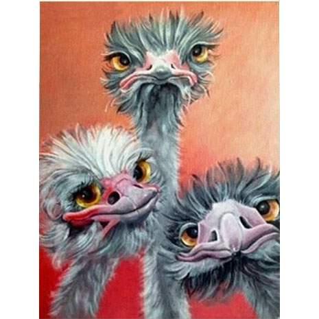 3 Cartoon Emus 5D diamond painting kit