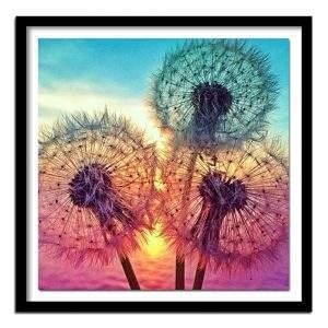 Dandelions at Sunset diamond painting art kits