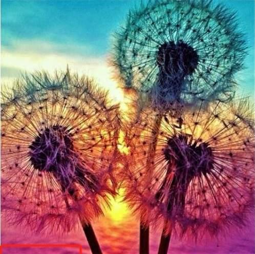 3 Dandelions at sunset diamond painting kit